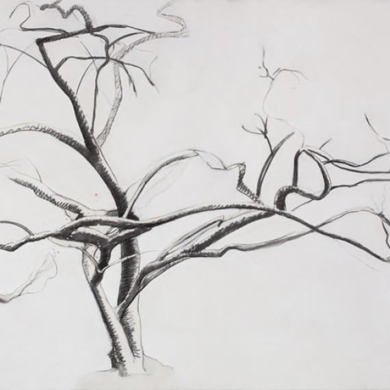 lydia tree drawing