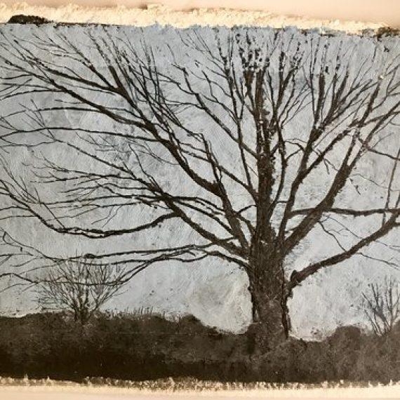 Tree 5: